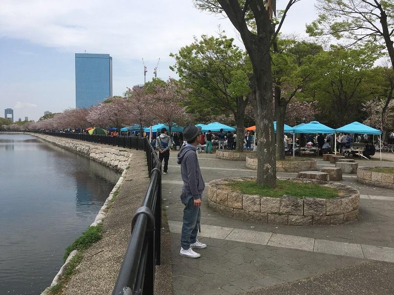 大阪城公園周辺の桜